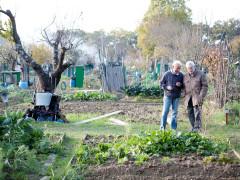 Orti per anziani di Borgo Venezia: passata la festa…